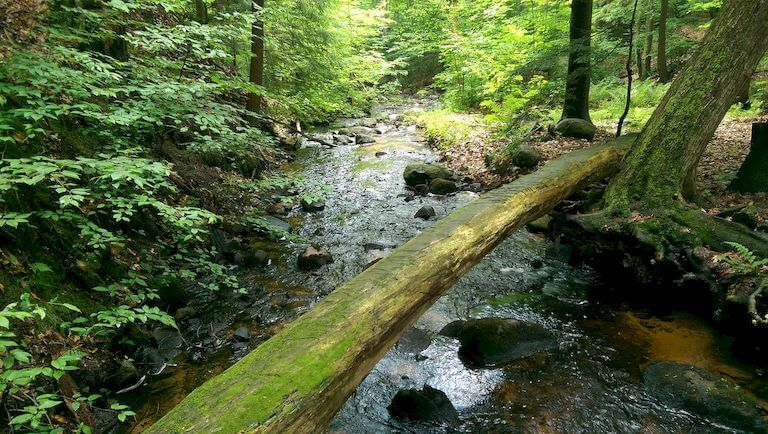 How to Build a Log Bridge