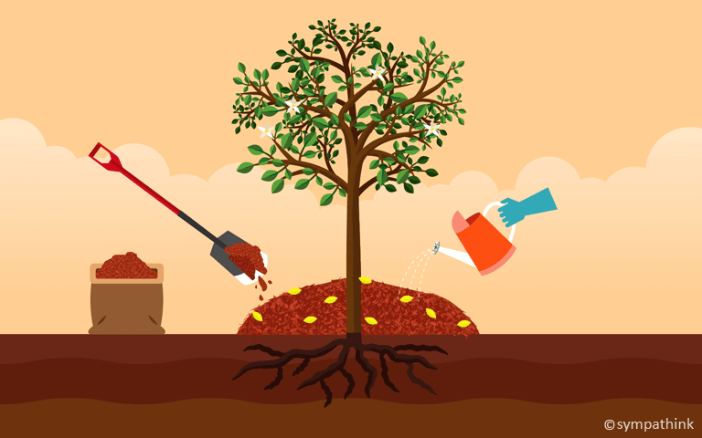 Fertilize with a Layer of Compost