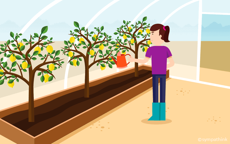 Grow Citrus in the Greenhouse
