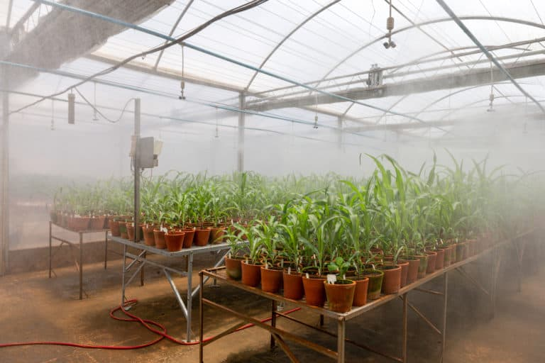 greenhouse irrigation watering plants on pots