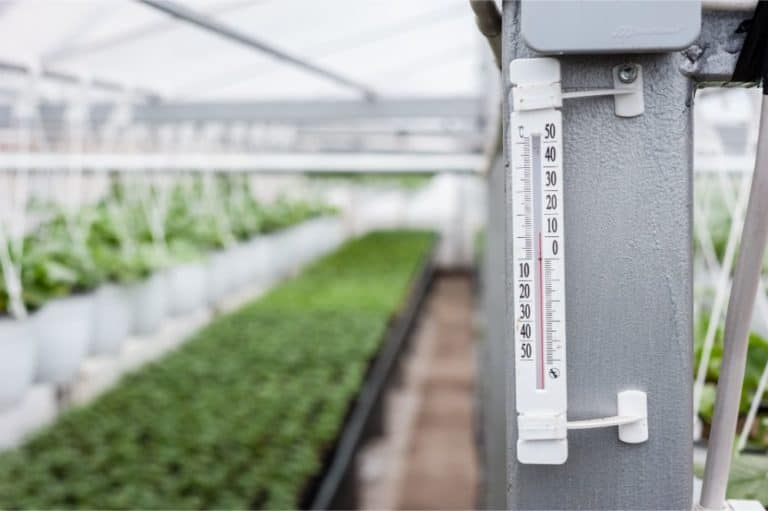 Greenhouse for flowers and plant nursery - temperature measuring