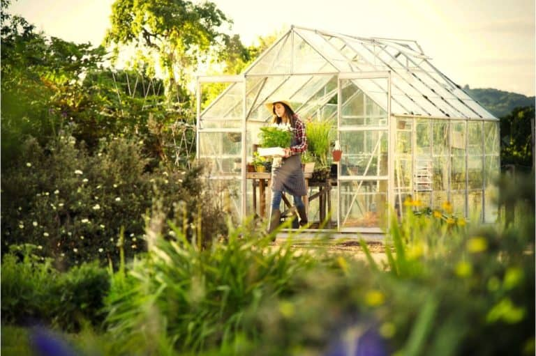 Woman gardening in a greenhouse