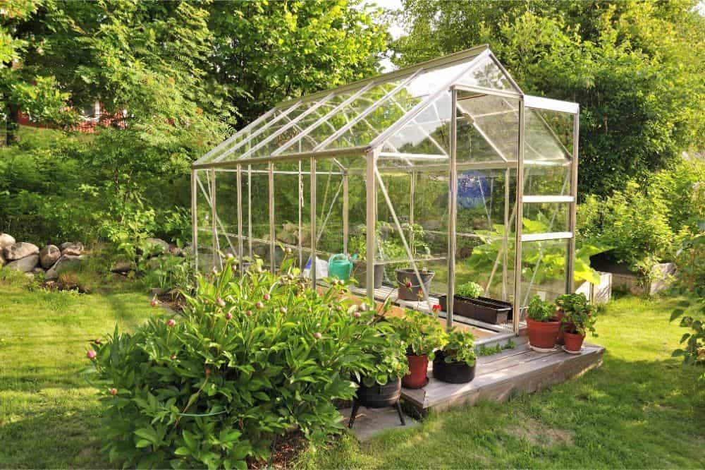 Beginner's Greenhouse Gardening Guide