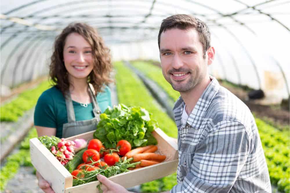 Best Greenhouse Plants