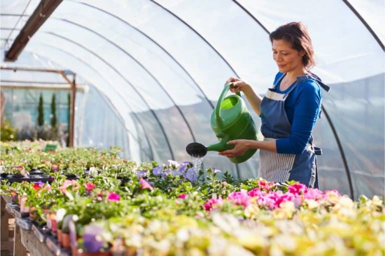 woman Working In Garden Center Watering Plants In Greenhouse With Watering Can