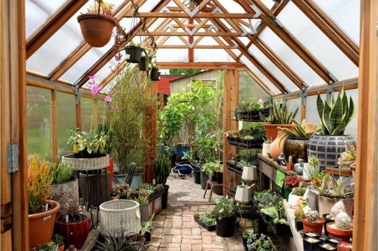 Greenhouse interior with different plants