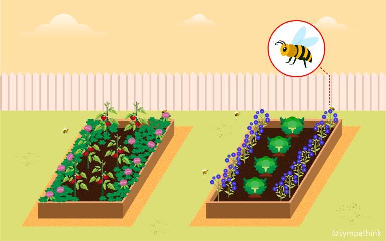 Attract Pollinators to Your Garden