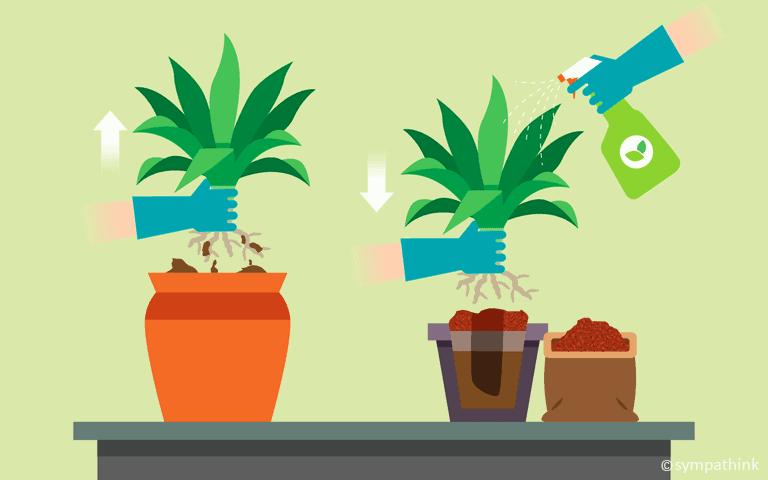 Bring Tender Plants Indoors
