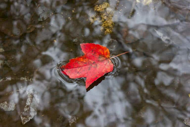 Floating Leave Compass