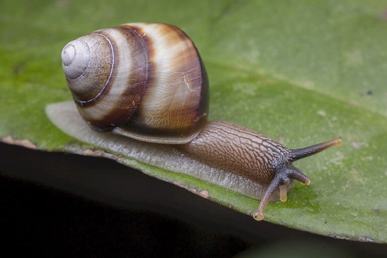 How to Get Rid of Snails in the Garden | Organic Snail Control