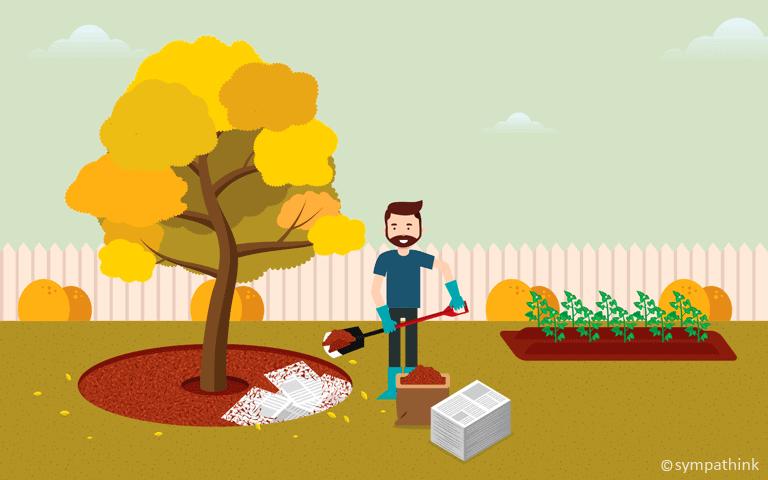 Mulch Around Plants