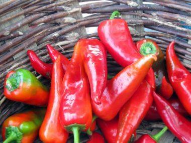 Pimiento Pepper