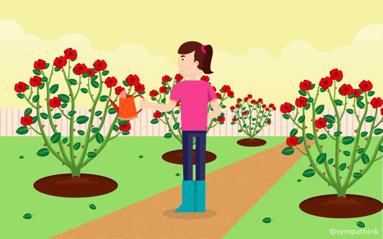 Plant a Rose Garden