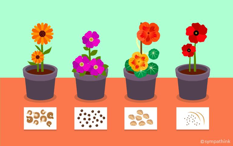 Plant Cool Season Annuals