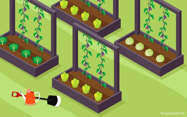 Plant Pole Beans