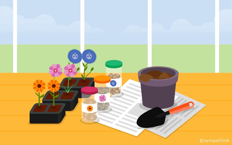 Plant Summer Annuals
