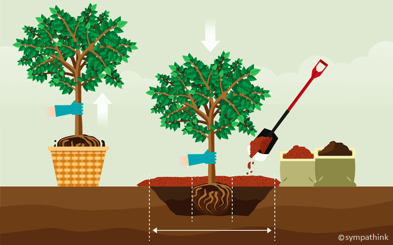 Plant Trees and Shrubs