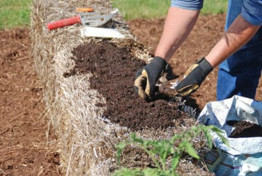 How to Plant, Grow & Harvest in a Straw Bale Garden