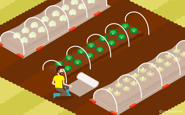 Protect Leafy Greens with Row Covers