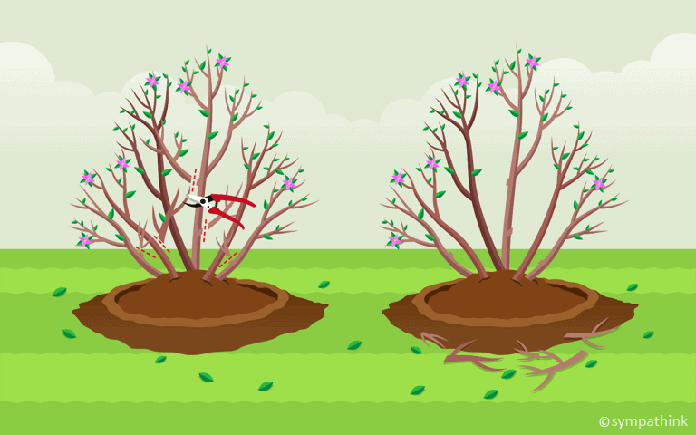 Prune Spring Flowering Trees and Shrubs