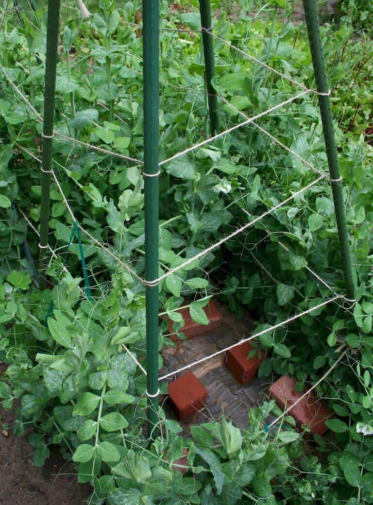 Teepee support tower for vegetables