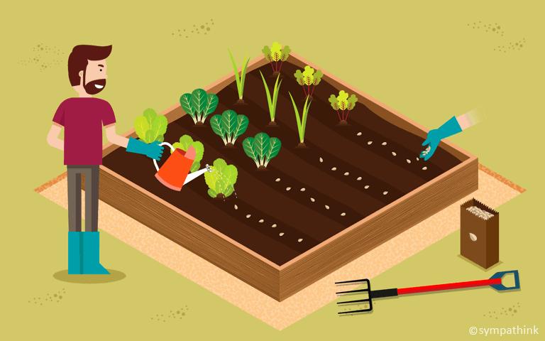 Sow Cool Season Vegetable Seeds