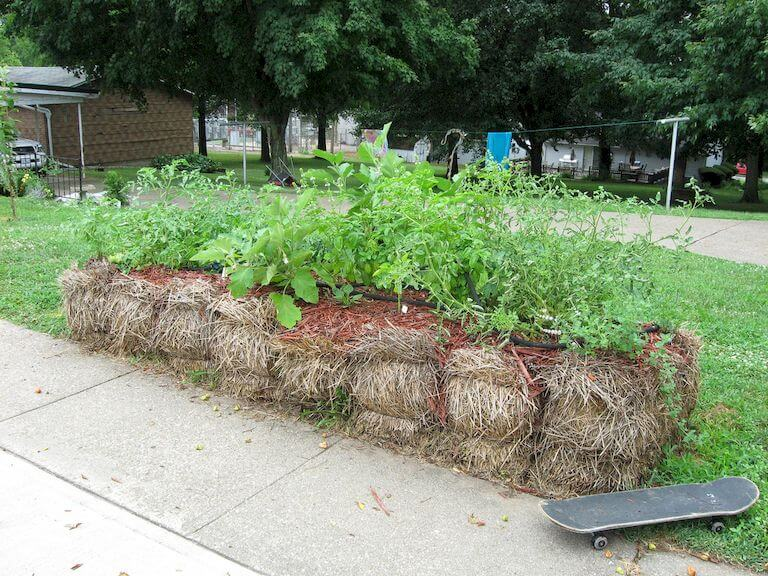 Image Result For Alfalfa Hay In Vegetable Garden