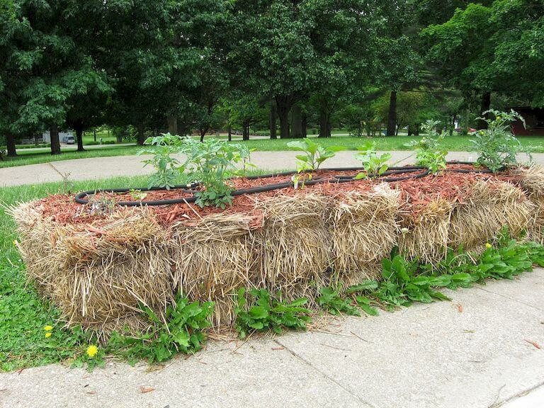How to Build a Straw Bale Garden in 7 Steps - Complete Instructions
