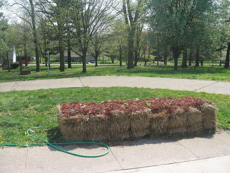 Straw bale garden in full sun