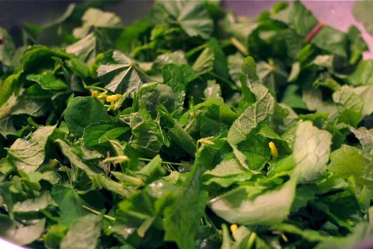 Best wild greens for salad